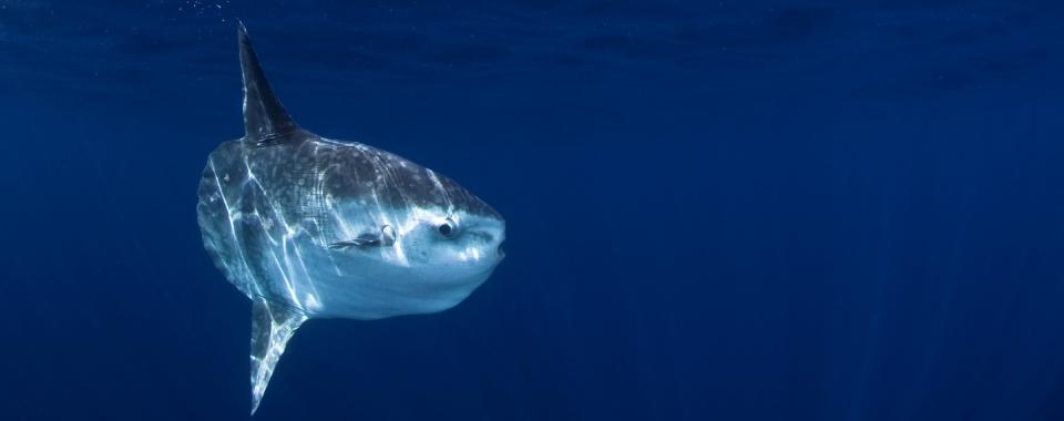 The World S Largest Plankton Ocean Blue Adventures