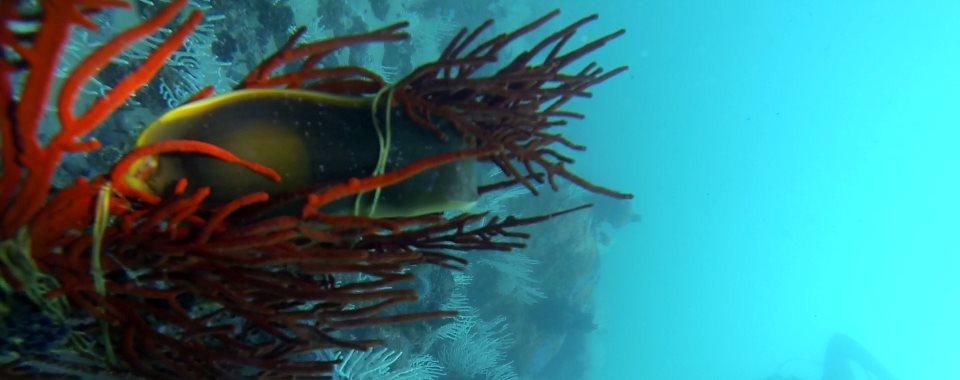 How do sharks and rays reproduce? - Ocean Blue Adventures