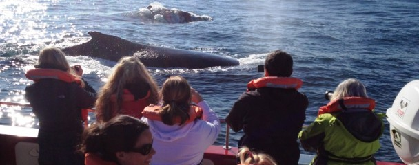 Humpback_Whales_Close_To_Boat_Plett