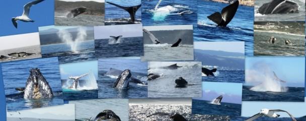 Best_of_Ocean_Blue_Whale_Season_2014 -