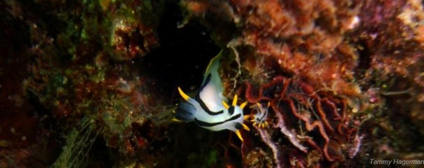 Crowned_Nudi_And_Baby -