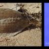 17 boxfish banner