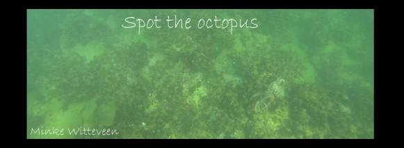 23 octopus