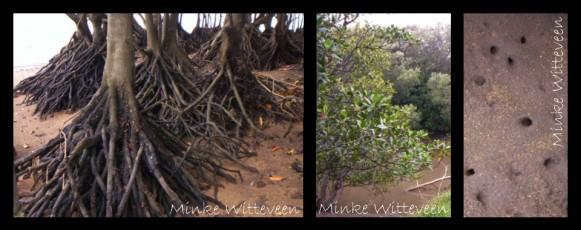 24 mangrove swamp