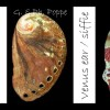 27 abalone banner