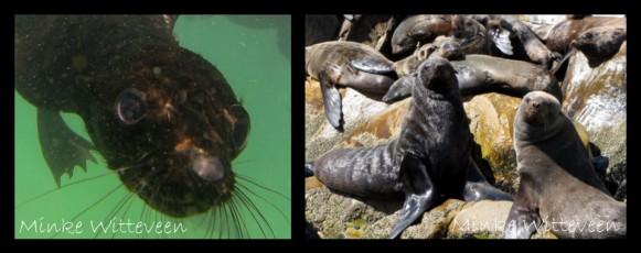 40 seals