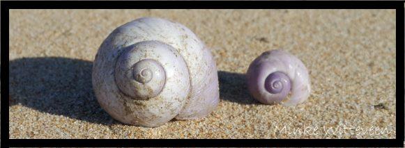 63 violet snail banner