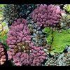 69 coral reef