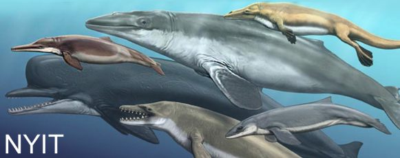 NYITCOM_EvolutionOfDolphinsAndWhales_Hero copy